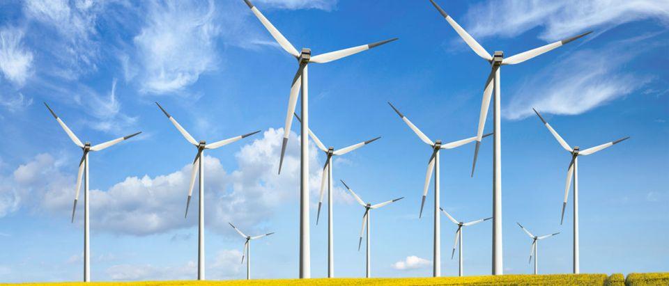 Dead bunnies were found by wind turbines. (Photo: majeczka/Shutterstock)