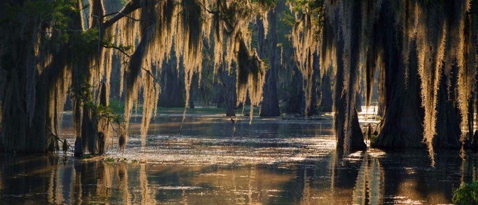 swamp Shutterstock Pierre Jean Durieu