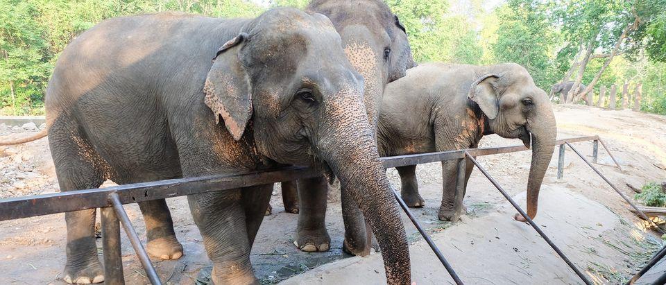 Tree elephants in the zoo