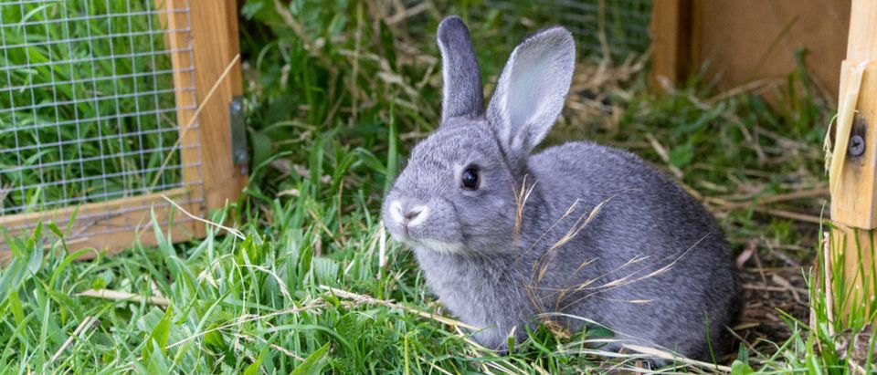 rabbit (Credit: Shutterstock)