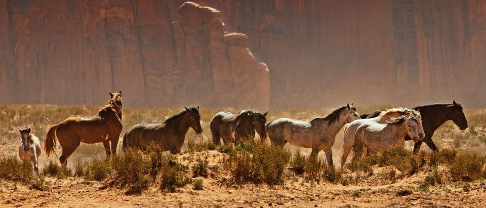wild horses Shutterstock/Susan Schmitz | Overcrowded Wild Mustangs Are Starving