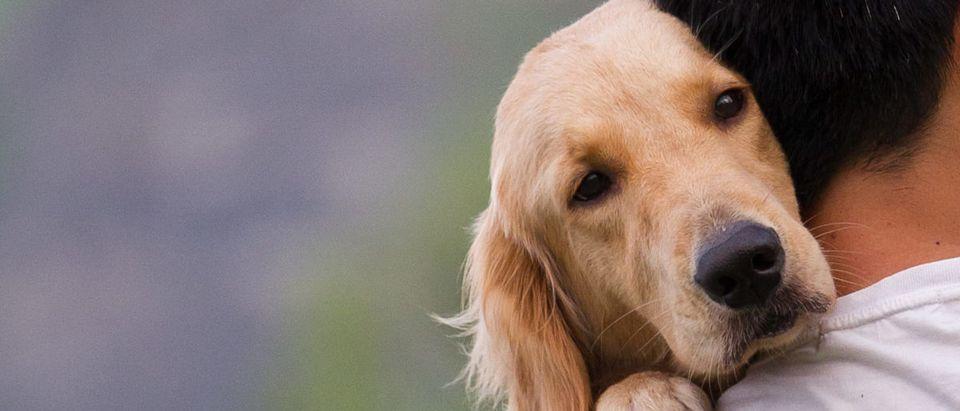Dog looking over owner's shoulder (ShutterStock/Sinseeho)