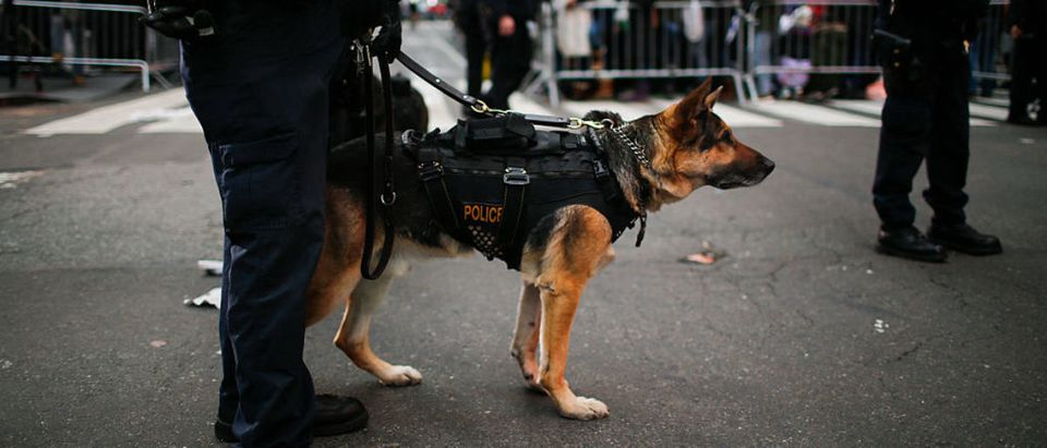 New York Police officers and a sniffer dog stand guard as people wait at Times Square for new years eve celebration on December 31, 2015 in New York City. (Photo by Eduardo Munoz Alvarez/Getty Images)