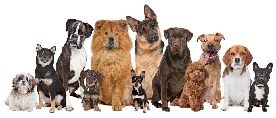 many dogs Shutterstock/Erik Lam