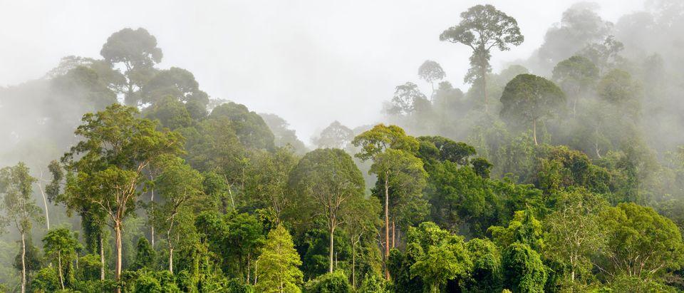 The rainforest in a fog. (Shutterstock)