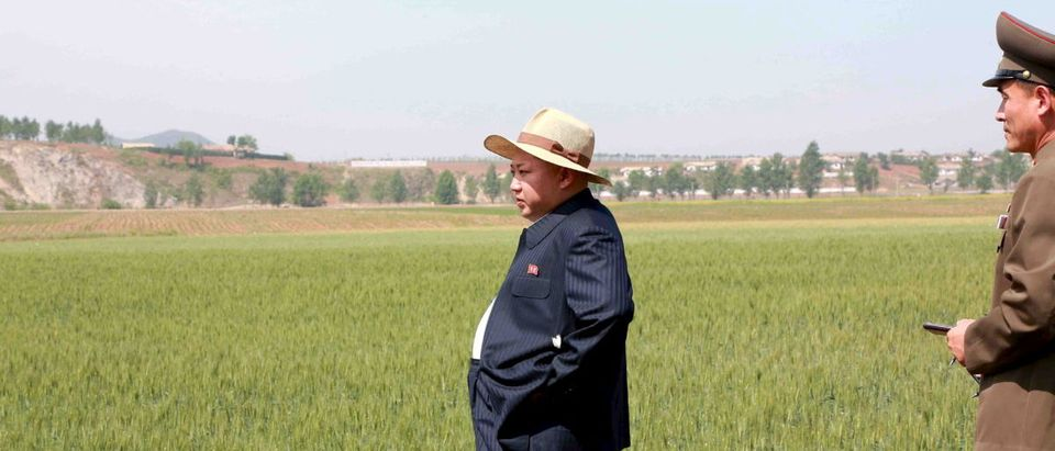 North Korean leader Kim Jong Un visits Farm No. 1116, under KPA (Korean People's Army) Unit 810, in this undated photo released by North Korea's Korean Central News Agency (KCNA) in Pyongyang on June 1, 2015. REUTERS/KCNA
