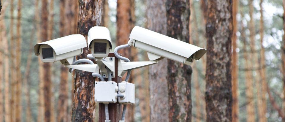 SurveillanceCamerasTreesOutdoor