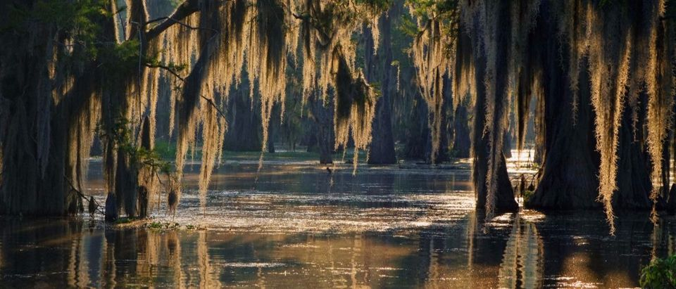 swamp ShutterstockPierre Jean Durieu