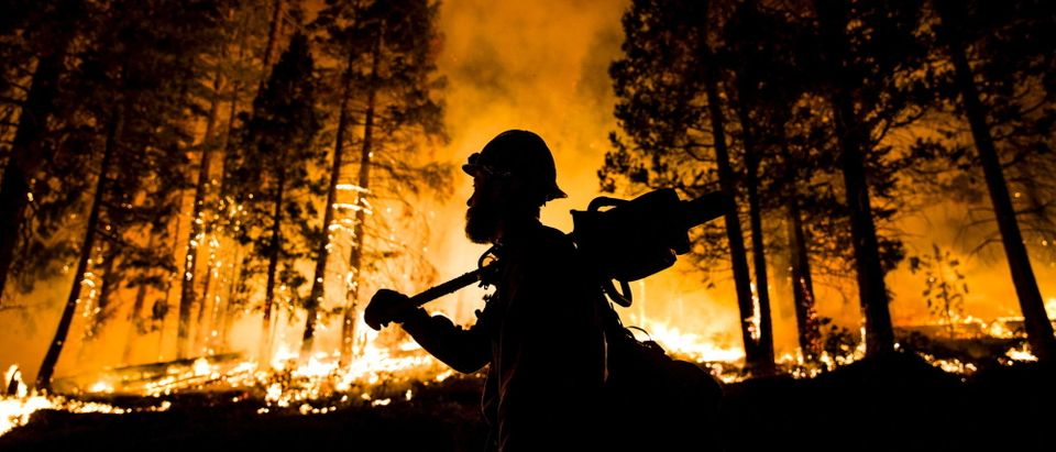 """A Los Padres National Forest firefighter watches a controlled burn on the so-called """"Rough Fire"""" in the Sequoia National Forest, California, August 21, 2015. REUTERS/Max Whittaker"""