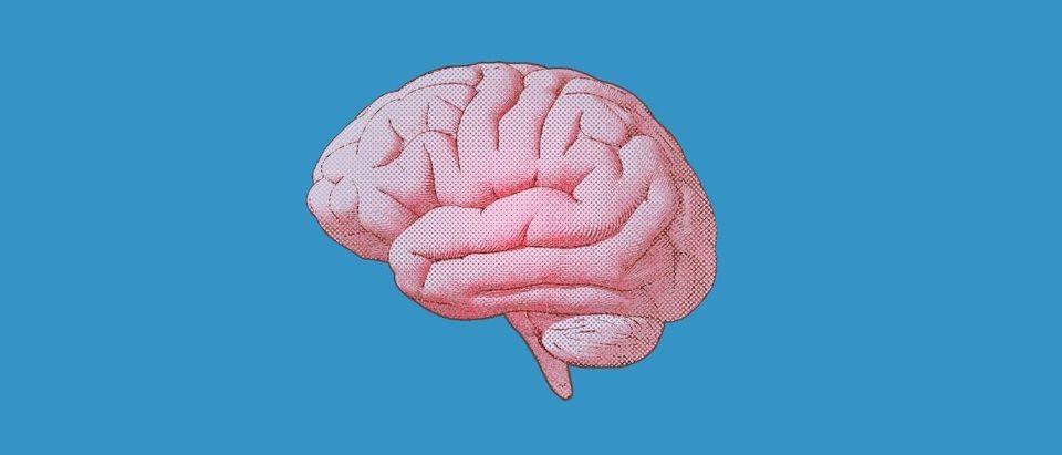 brain Shutterstock/Jolygon