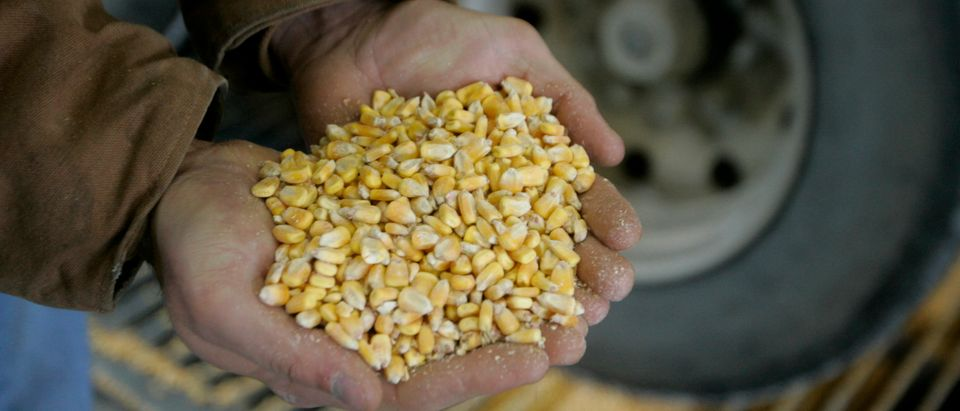 Raw corn is shown as it is unloaded for processing at the Lincolnway Energy plant in the town of Nevada, Iowa, December 6, 2007. The company, one of a growing number across Iowa and the United States, converts corn to ethanol fuel to be used in flexible-fuelled vehicles as an alternative energy source to oil. The business operates around the clock seven days a week, processing approximately 50,000 bushels (1.27 tonnes) of corn daily, and creating 150,000 gallons (567,752 litres) of ethanol per day. REUTERS/Jason Reed (UNITED STATES) | Report Says The RFS Has Failed