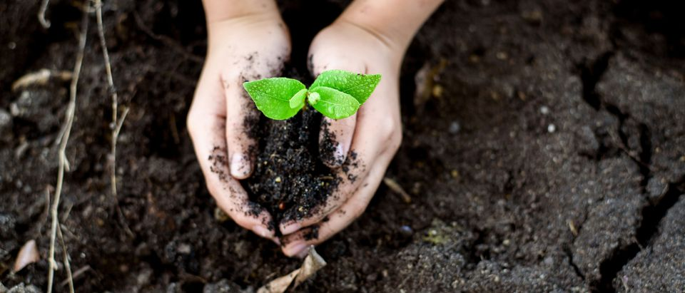 Selective focus on Little seedling in black soil on child hand. Earth day concept. (Shutterstock)