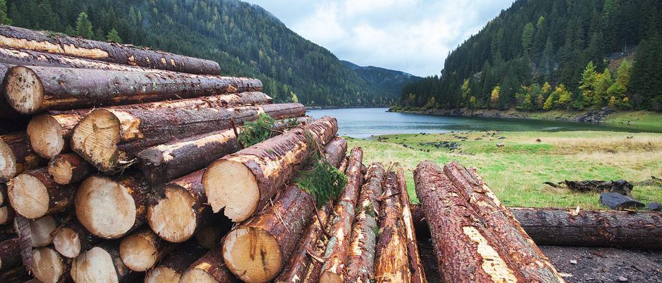 Source: Marten_House/Shutterstock | An Earth Day List Activist Won't Show You