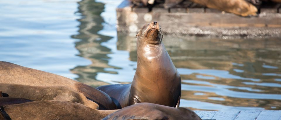 Sea_Lion_Shutterstock