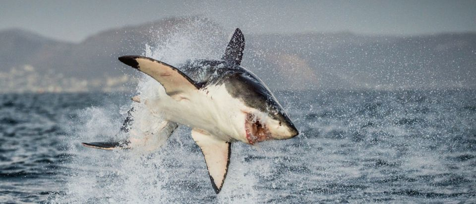 Shark (Credit: Shutterstock) | House Bill Buries Fisheries Under Regs