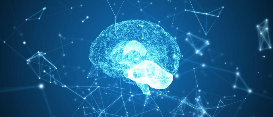 brain_intellectual_propert_Shutterstock