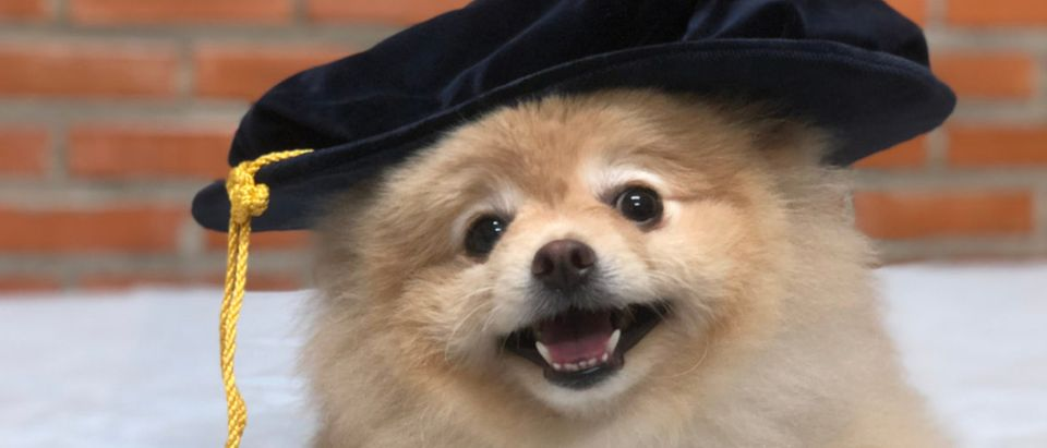 A dog has graduated. (Shutterstock/Maslin_CEO)