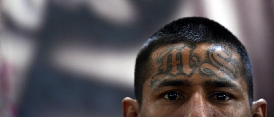 A member of the Mara Salvatrucha (MS13), is pictured on Monday, March 4, 2013, in the Criminal Center of Ciudad Barrios, San Miguel, 160 km east of San Salvador, one year after the cessation of the violence between the rivalry of two large gangs in El Salvador, MS13 and 18 st. El Salvador, a small country of six million people, is brimming with an estimated 50,000 street gang members, plus another 10,000 who are behind bars. Since the first truce took effect about a year ago, the average daily death toll from gang-related violence has gone down from 14 to five. AFP PHOTO / Marvin RECINOS (Photo credit should read Marvin RECINOS/AFP/Getty Images)