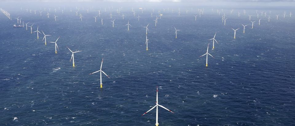 Power-generating windmill turbines are pictured at the 'Amrumbank West' offshore windpark in the northern sea near the island of Amrum, Germany September 4, 2015. REUTERS/Morris Mac Matzen | Anti-Oil Drilling States Want Wind Farms