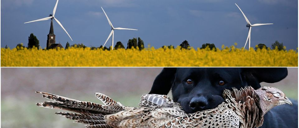 Windmills and bird game, REUTERS/Pascal Rossignol and Eddie Keogh