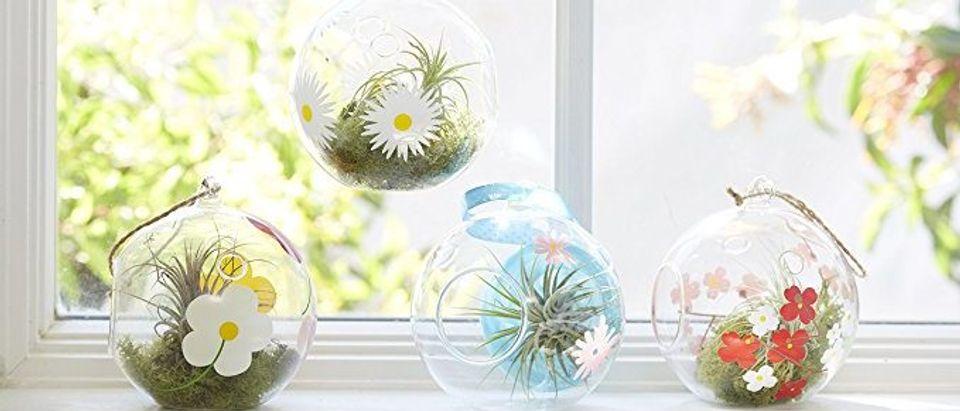 Normally $21, these globe terraria are 25 percent off (Photo via Amazon)
