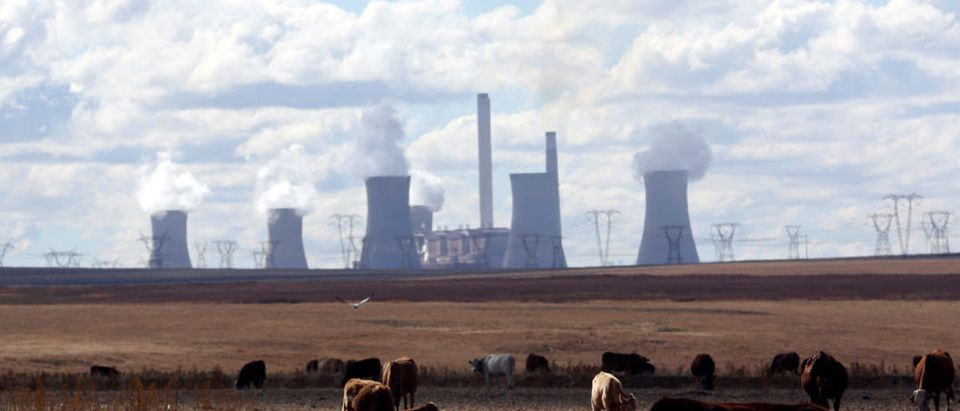 Cows graze as Smoke rises from the cooling towers of Matla Power Station, a coal-fired power plant operated by Eskom in Mpumalanga province, South Africa