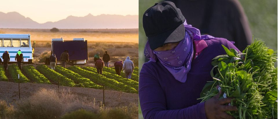 Temporary agricultural workers walk through farm land in the early morning in Weldon, Arizona, on February 16, 2017, near the US/Mexico border. Attention Editors: This image is part of an ongoing AFP photo project documenting the life on the two sides of the US/Mexico border simultaneously by two photographers traveling for ten days from California to Texas on the US side and from Baja California to Tamaulipas on the Mexican side between February 13 and 22, 2017. You can find all the images with the keyword : BORDERPROJECT2017 on our wire and on www.afpforum.com / AFP / JIM WATSON (Photo credit should read JIM WATSON/AFP/Getty Images)