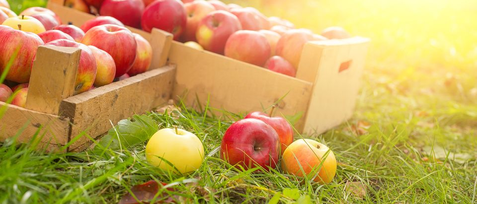 apple_box