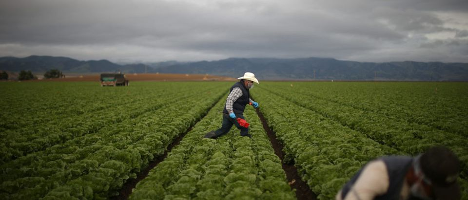 The Wider Image: Trump reassures farmers about temporary visas