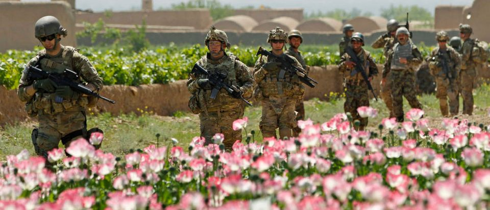 U.S. Army soldiers walk past a poppy field during a patrol through the village of Jelawar in the Arghandab Valley north of Kandaha