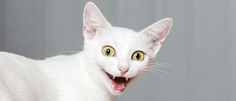 cat Shutterstock/HolyCrazyLazy