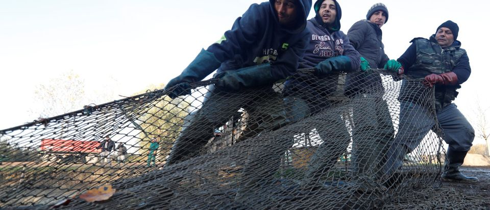 Hungarian fishermen pull a net to collect fish at one of Europe's biggest freshwater fishing firms in the Great Hungarian plain in Hortobagy