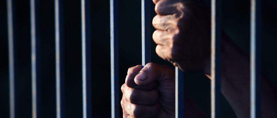 Mama Bear Arrest. Shutterstock