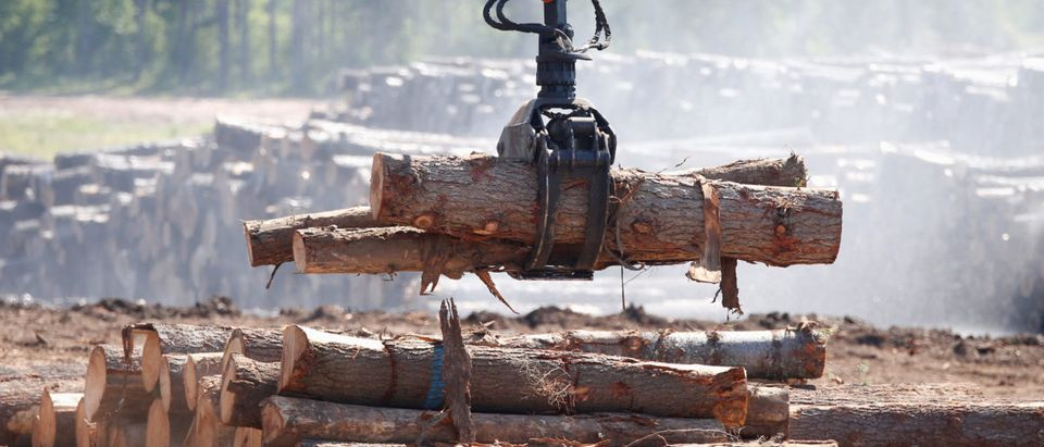 Logs are moved at the Murray Brothers Lumber Company in Madawaska