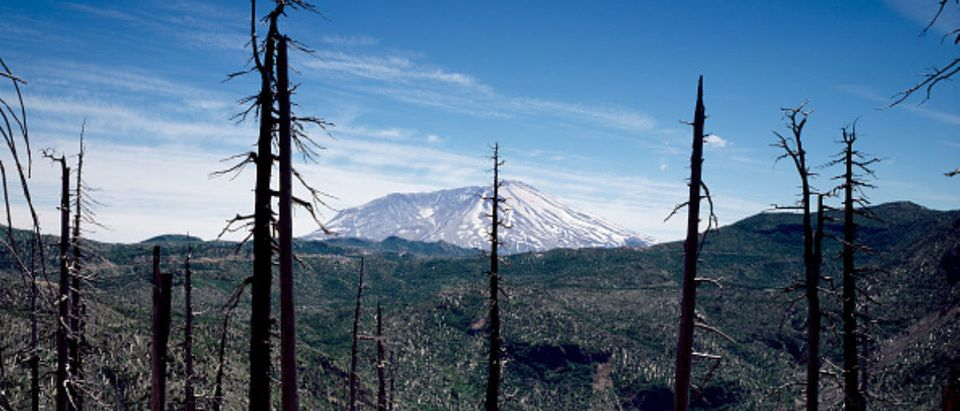 Burned forestland in the foreground, Mount St. Helens volcano in the distance, several years after a