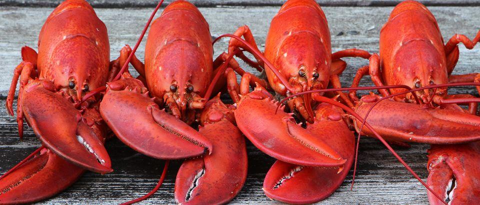 Row of lobsters