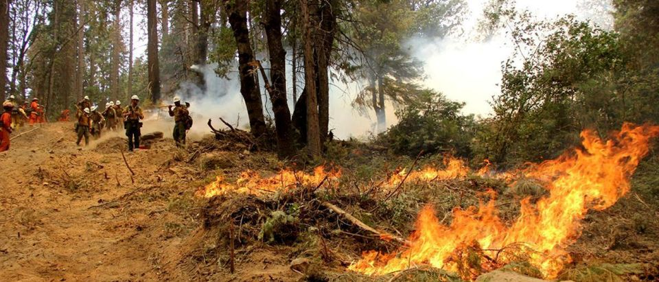 Firefighters battle the Ferguson Fire, the largest fire in the Sierra National Forest's history, in this U.S. Forest Service photo released on social media, in California, U.S., August 8, 2018. Courtesy US Forest Service/Handout via REUTERS