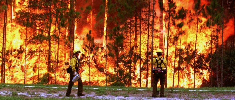 Firefighters from the U.S. Forestry Service from the Sequoia National Forest in California, set a backfire to save an elementary school in the Palm Coast development of Flagler County July 3.