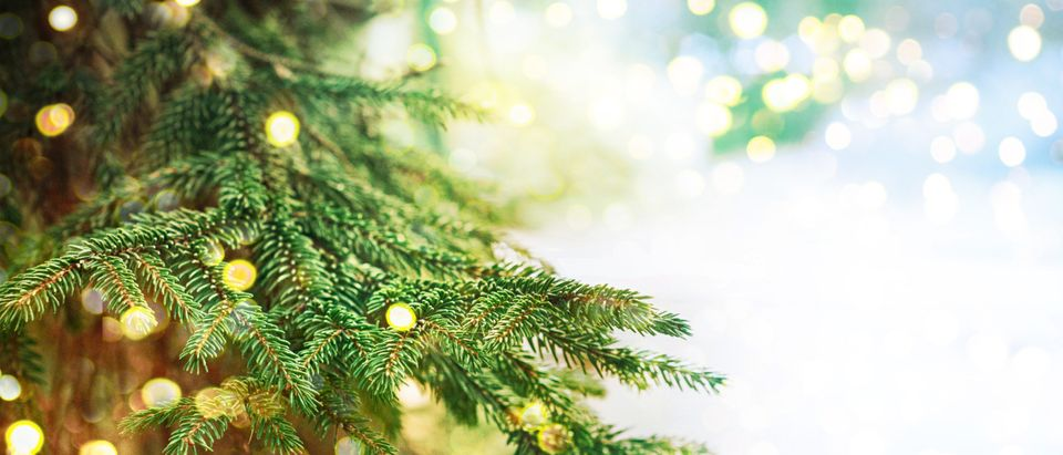 Christmas Tree (Shutterstock/Guschenkova)
