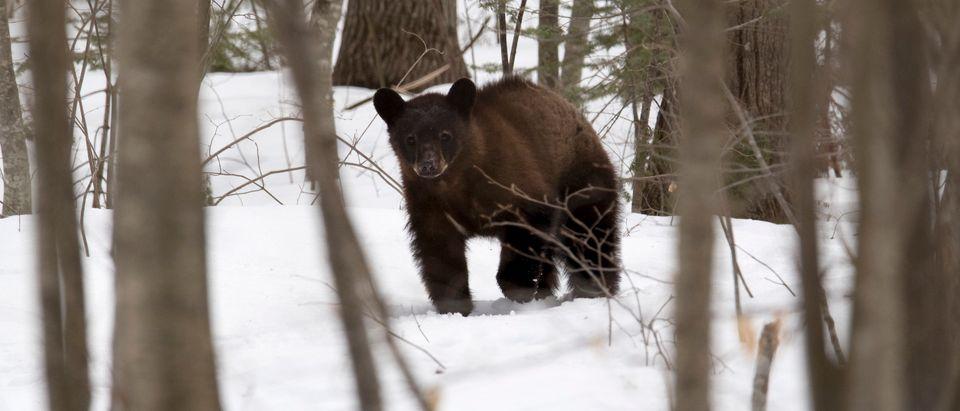 animal-US-LIFESTYLE-ENVIRONMENT-ANIMAL-BEARS
