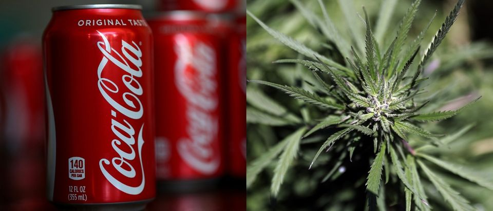 coca cola cannabis