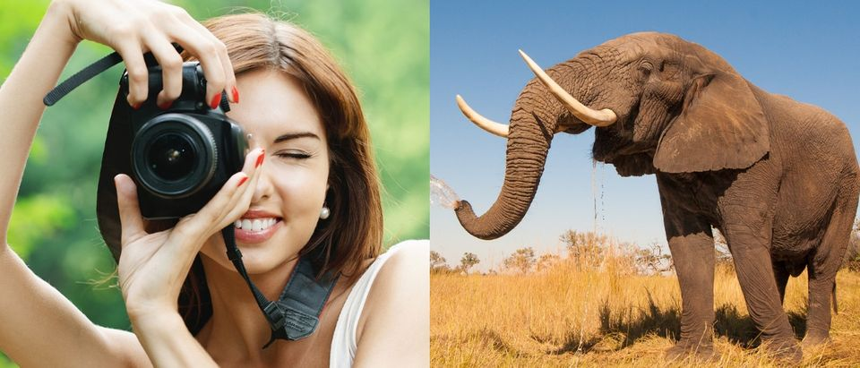 A German tourist was trampled to death by an elephant she tried to take a picture of on Sept. 26, 2018. Shutterstock images via user Donavan van Staden and BestPhoto Studio