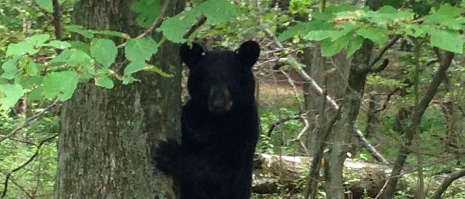 A black bear stands in a wooded area in Newton