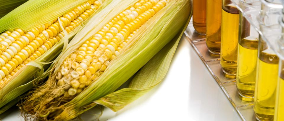 President Trump to give the ethanol industry a boost. Shutterstock