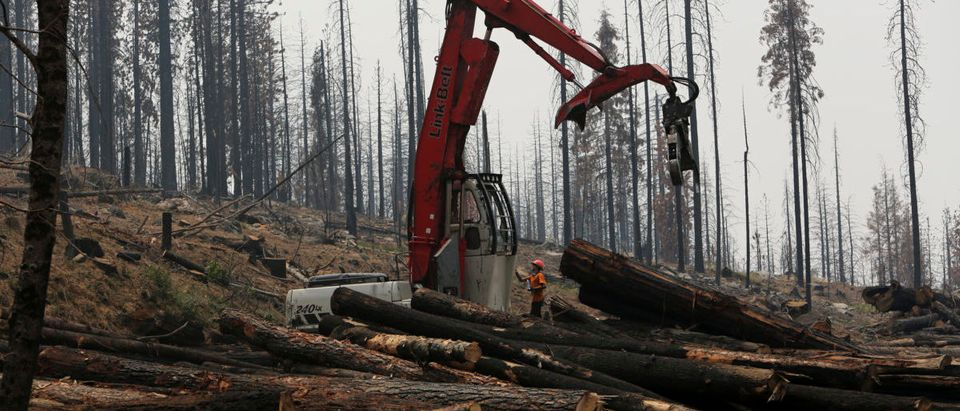 An active logging site is pictured among burned trees from last year's Rim fire near Groveland