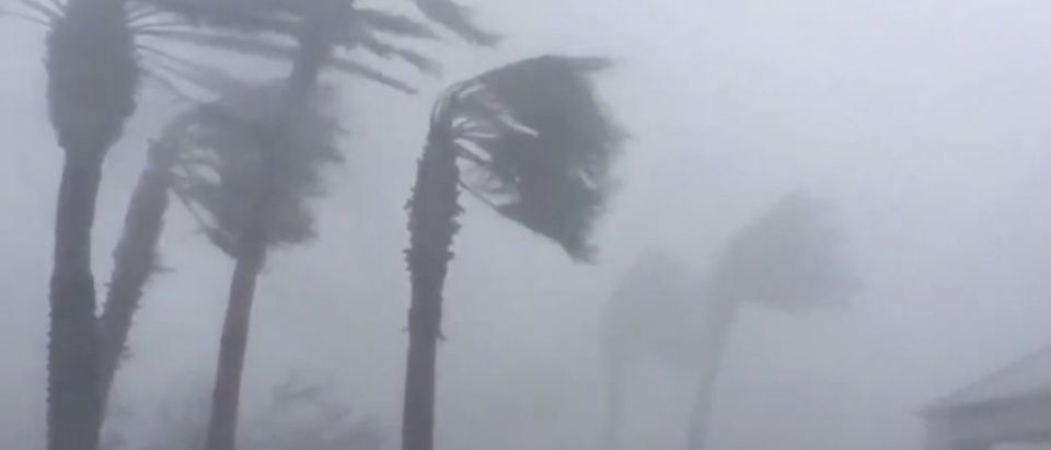Palm trees are seen during a Hurricane Michael in Panama City, Florida, U.S., October 10, 2018 in this picture obtained from social media. WeatherNation/via REUTERS