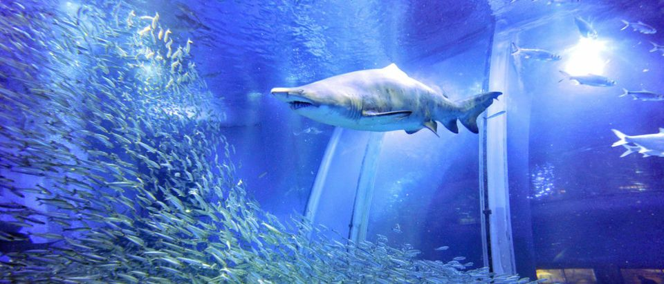 A shoal of 50,000 sardines swim around s