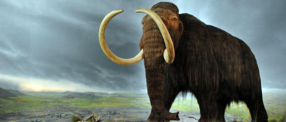 Woolly Mammoth (Shutterstock/Pavel Masychev)