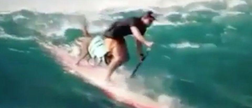 Dog_Surfing