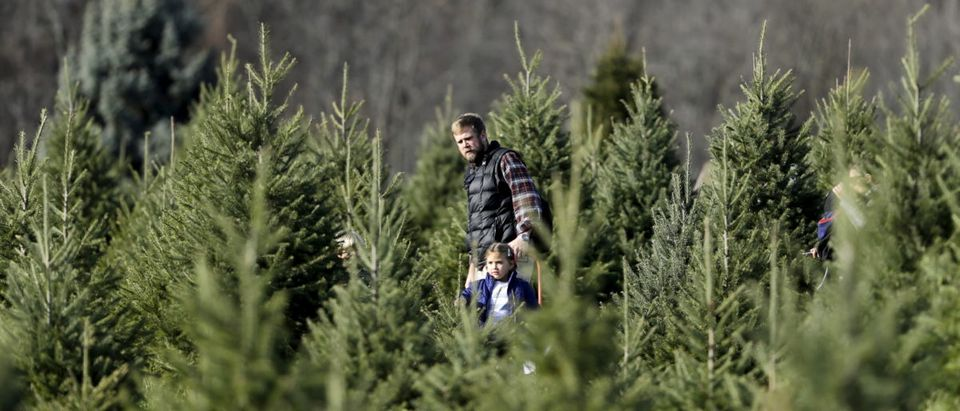 Family searches for perfect Christmas tree at Snickers Gap Christmas Tree Farm in Virginia